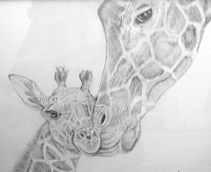 Giraffes - pencil sketch